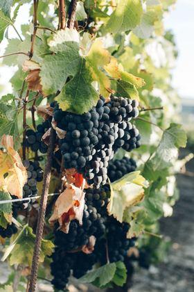 Les vignes de l'aéroport de Dijon Bourgogne cherchent un exploitant